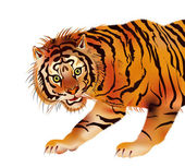 Siberian tiger - vector — Stock Vector
