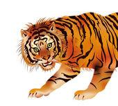 Siberian tiger - vector — Stock Vector