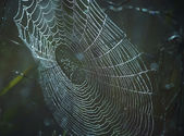 Dewy cobweb — Stock Photo