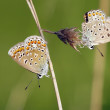 Butterflies on the grass — Stockfoto