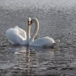Swan lake — Stock Photo #2397175