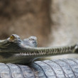 Stock Photo: Indigavial