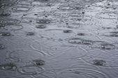 Rings on water - rain — Stock Photo