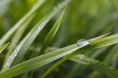 Rugiada sull'erba — Foto Stock