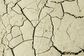 Parched earth - dried ground — Stock Photo