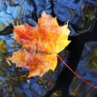 Autumn leaf on the water level — Stock Photo