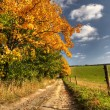 Country road and autumn rural landscape — Stock Photo