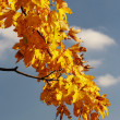 Stock Photo: Autumn branch