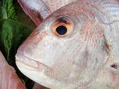 Fish face — Stock fotografie