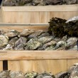 Crates of oysters — Foto Stock