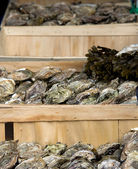 Crates of oysters — Stock Photo