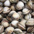 Cockle shells — Stock Photo