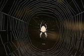 Spinne — Stockfoto