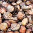Stock Photo: Clams shell background