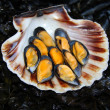 Stock Photo: Mussels and scallops