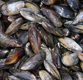 Mussel shell background — Stock Photo