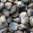 Clam shell background — Stock Photo