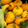 Pumpkins & squashes - Stock Photo