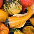 Gourds & squashes background - Stock Photo