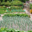 Vegetable patch — Stock Photo #2432230