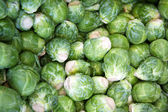 Sprouts background — Stockfoto
