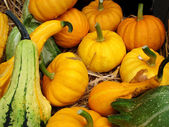 Pumpkins & squashes — Stock Photo
