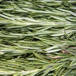 Rosemary - Stock Photo