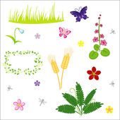 Floral vector elements — Stock Vector