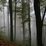 Autumn forest — Stock Photo