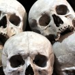 Skull in catacombs — Stock Photo