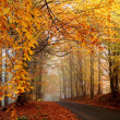 Autumn road - Stock fotografie