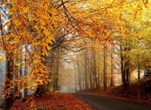 Autumn road — Stock Photo
