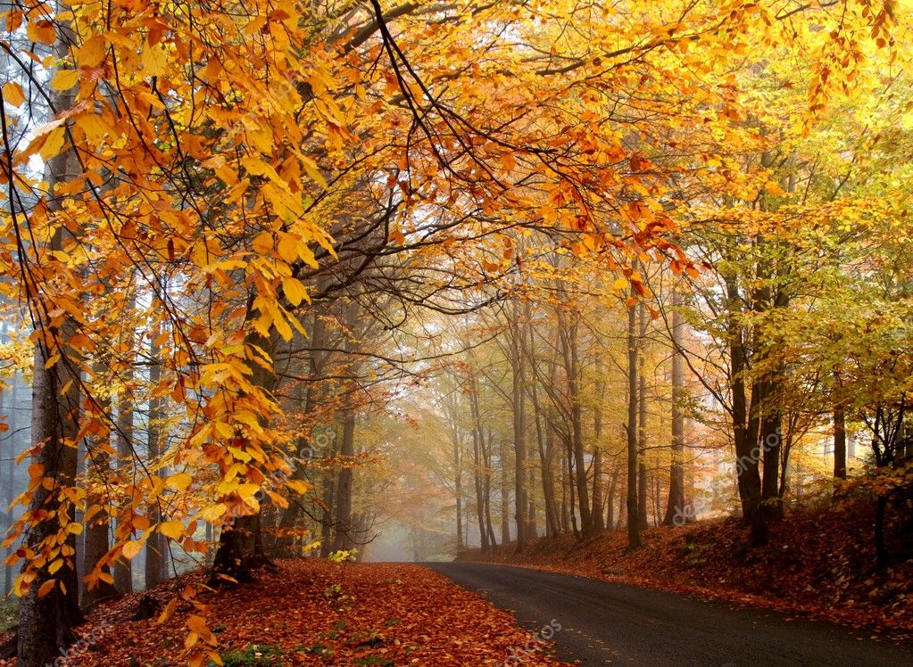 View of  autumn road  — Stock Photo #2279590