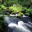 Wild brook - Stock Photo