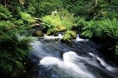 Wild brook — Stock Photo