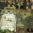 Old Jewish cemetery — Stock Photo #2324927