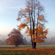 Stock Photo: Trees in autumn colors