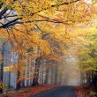 Autumn colors in misty forest — Stock Photo #2327451