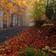 Stock Photo: Autumn colors in misty forest