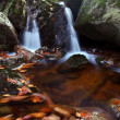 torrente di montagna in autunno — Foto Stock
