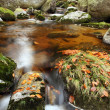 Mountains creek in autumn — Stock Photo #2327773
