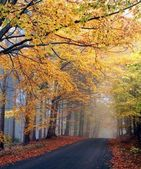 Autumn colors in misty forest — Stock Photo