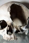Skull - catacombs — Stock Photo