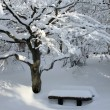 Winter in park — Foto Stock