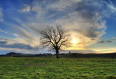 Lonely tree at sunset — Stock Photo
