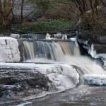 Frozen creek — Stock Photo #2391896