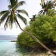 Stock Photo: Paradise beach and palm tree HDR