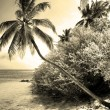 Paradise beach and palm tree — Stock Photo
