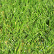 Grass background — Stock Photo #2459420