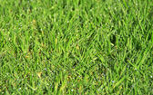 Sfondo di erba — Foto Stock